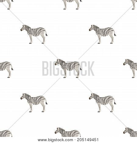 African, desert zebra. Wild cloven-hoofed animal, zebra single icon in cartoon style vector symbol stock illustration .