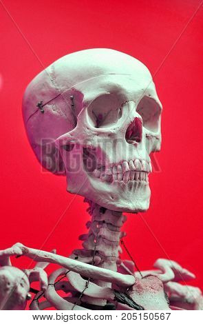 Old  very scary skull on red background.