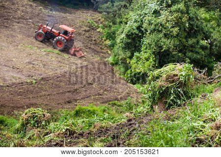 Tractor plowing and harvesting of yellow potato ( Solanum phureja )