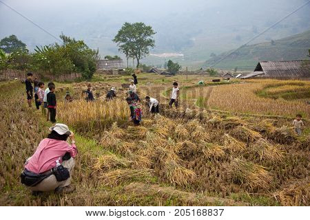 Tourist Photographs North Vietnamese Farmers Working In Their Field