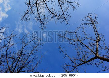 Branch With Blue Sky Background