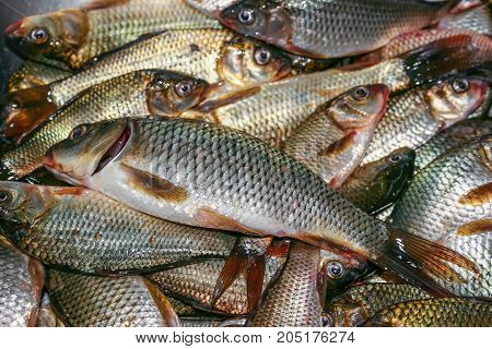 Foodbackground of carp fish ordinary, Carassius carassius, fresh close-up. Background. Texture