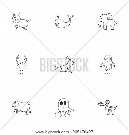 Set Of 9 Editable Zoology Doodles. Includes Symbols Such As Cachalot, Ewe, Lobster And More