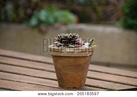 Close up of a catus with a wooden table.