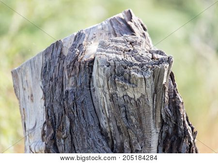 the stump of the tree in nature .
