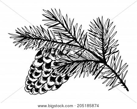 Branch of pine with cone engraving vector illustration. Scratch board style imitation. Hand drawn image.