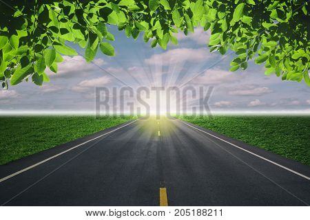 The road and green leaves for background.