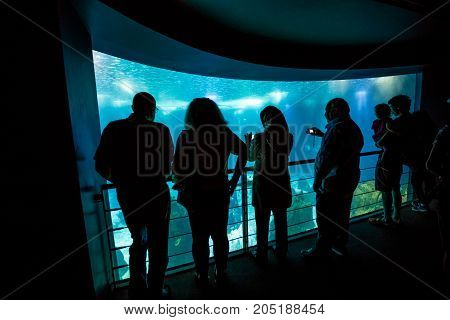 Lisbon, Portugal - August 24, 2017: tourists watching central tank of popular Lisbon Oceanarium, Parque das Nacoes, one of the largest aquarium in the world. Tourism, holidays and leisure concept.