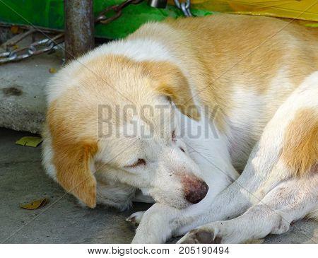 A Cute Dog Sleeping On Rural Road