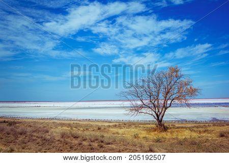 Pink salt lake coastline landscape - dry grass, tree,  salt crust surface with brine puddles and blue sky