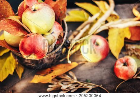 Autumn background with red apples and fallen leaves over wooden background flat lay apples in pot