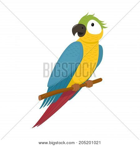 Cute macaw, ara parrot sitting on tree branch, exotic tropical bird, cartoon vector illustration isolated on white background. Cartoon style macaw, ara parrot sitting on a branch