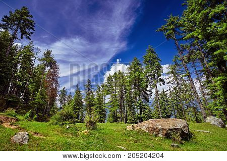 Beautiful Mountain Forest Against Blue Sky Background. Kullu Valley. Naggar, Himachal Pradesh. North