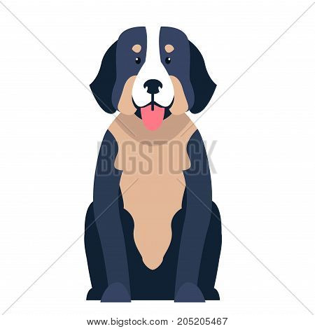 Funny cute St. Bernard dog sitting with hanging out tongue flat vector isolated on white. Lovely purebred pet illustration for animal friends and companions concepts, pet shop ad
