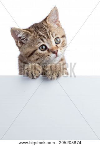 Funny kitten peeking out of a blank sign, isolated on white background