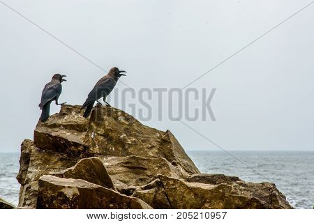 A pair of crows sitting on a rock mound.