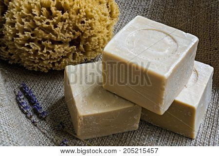 Handmade olive oil soaps together with a natural sea sponge and a small branch of lavender on sackcloth