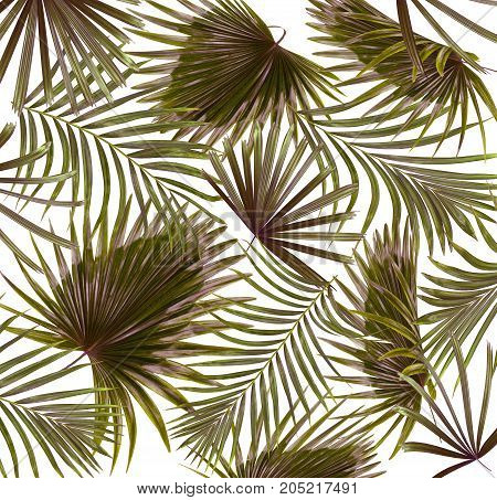 Green leaves of palm tree on white background