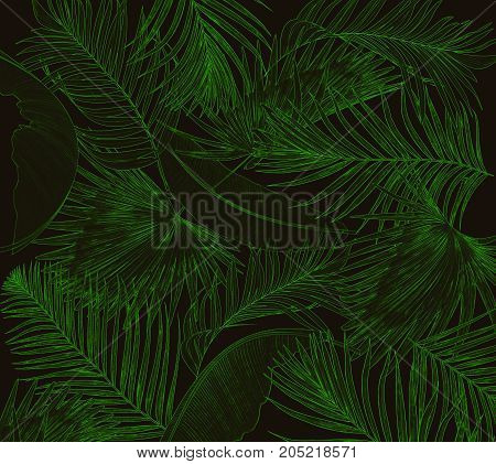 Green leaves of palm tree on black background