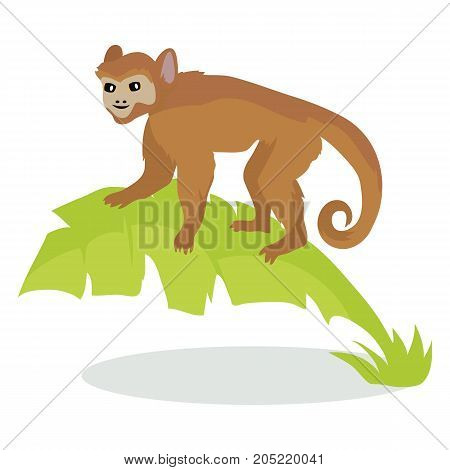 Monkey cartoon character.  Monkey on palm leaves flat vector isolated on white. African fauna. Ape in jungle icon. Wild animal illustration for zoo ad, nature concept, children book illustrating