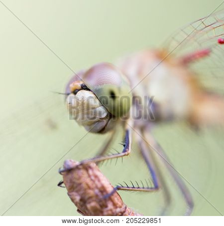 dragonfly in nature. macro . In a park in the nature