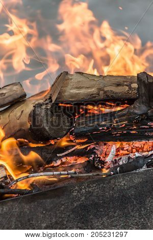 fire wood . In a park in the nature