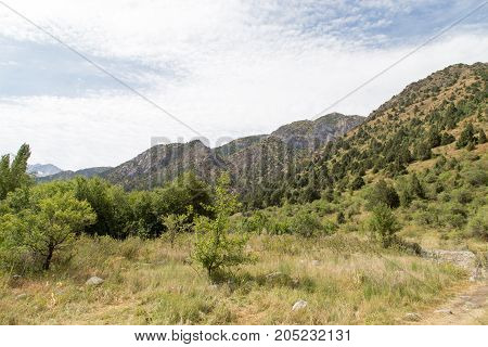slopes of the mountains in Kazakhstan . In a park in the nature