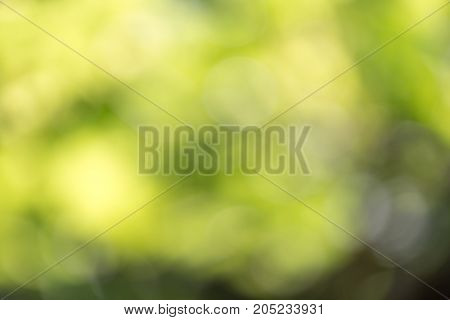 beautiful bokeh in nature . In a park in the nature