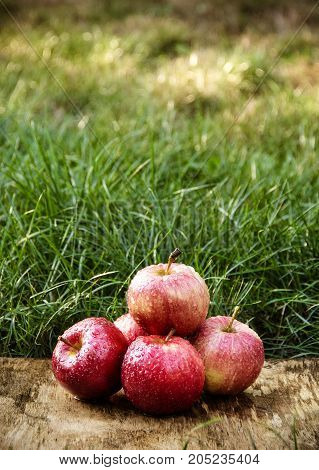 Juicy red apples on a background of green grass. Autumn fruits. Harvest.