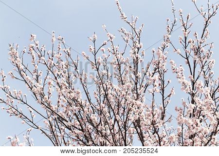 flowers on a tree in spring . In a park in the nature