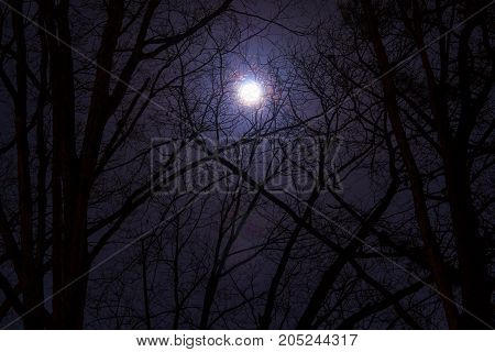 The full moon in cloudy sky seen through branches of trees at night