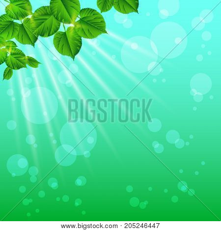 Sun rays shine through the leaves. Nature background. Spring / summer background. Close-up. Concept: Save the beauty of nature.