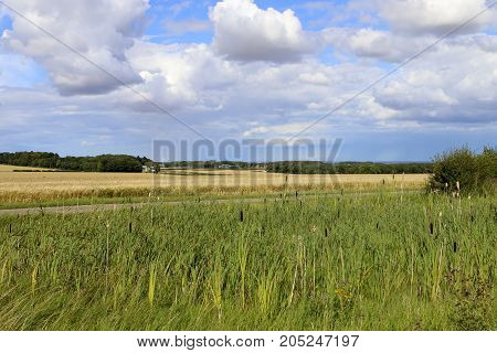 Bullrushes And Barley