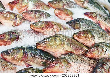 Cooled Purified Fish Carp On Store