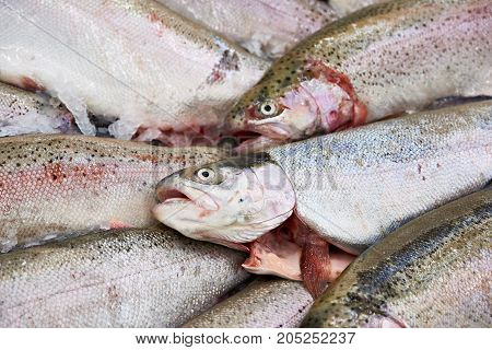 The cooled fish trout on store shelves