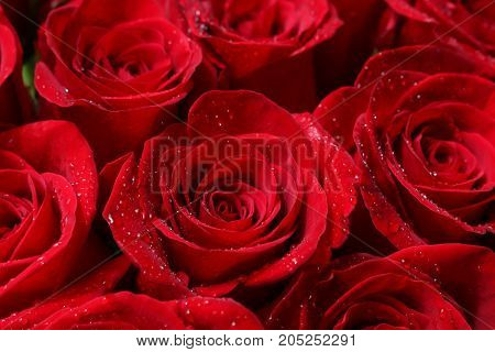 Close up of red roses and water drops.