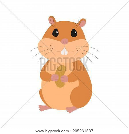Cute hamster with a nut icon. Flat vector illustration, cartoon character isolated on white background.