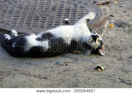Spotted cat lies on gray sand near the iron hatch