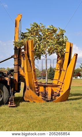 The mounted spade, jaws, and bucket are part of a tree removal  and transplanting machine and is lifting the jaws after dropping the tree into a hole