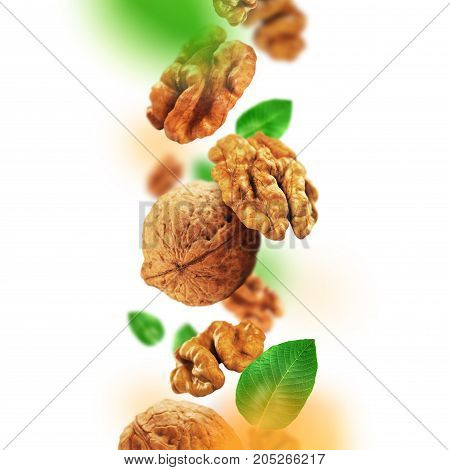 Quality walnuts and leaves falling from the air.