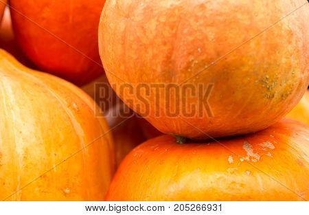 a lot of yellow and orange pumpkin lies on the counter, preparation for halloween, bright colors, holiday symbol,  background,