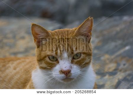 homeless cat living on istanbul street composition photography
