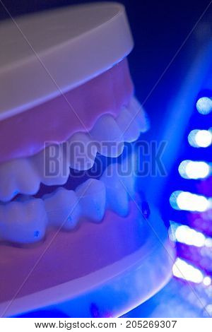 Dental Teeth Jaw Model
