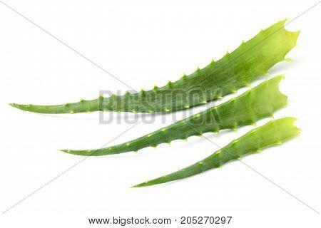 Three fresh leaf aloe vera isolated closeup on white background.