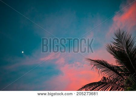 pink clouds and blue sky with palm fronds and the moon in the backround at sunset