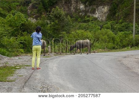 woman standing on road looking at a buffalo