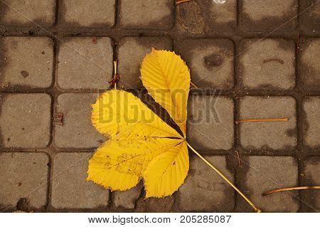 Autumn etude from yellow fallen the leaves