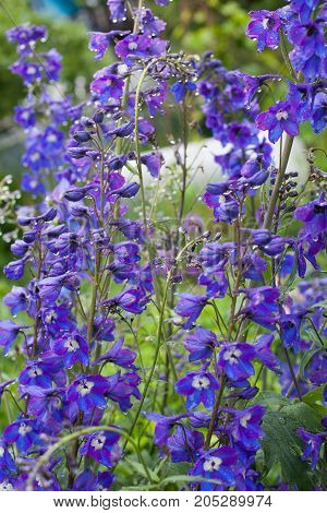 plant with beautiful blue flowers growing in the garden