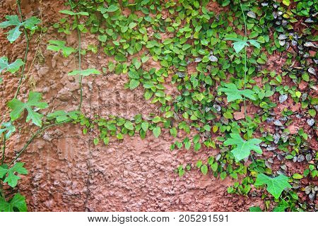 Natural green leaf on wall nature background.