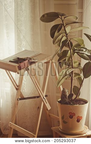 Young artist's working place in the province style living room with a tremendous ficus in a flowerpot